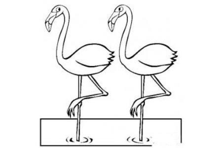 动物简笔画大全 两只火烈鸟简笔画图片
