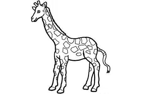 小学生长颈鹿简笔画