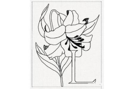 花朵简笔画图片 百合花简笔画