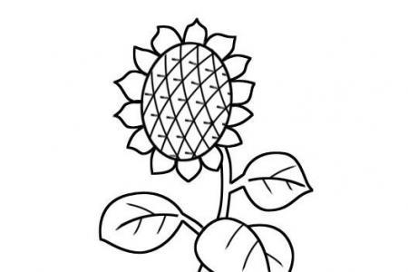 简单向日葵怎么画