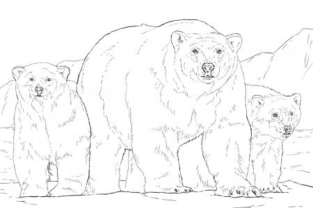 北极熊一家