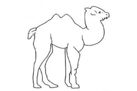 卡通骆驼简笔画图片