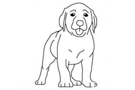 拉布拉多小狗简笔画图片