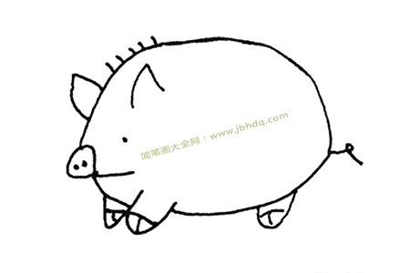 大肥猪简笔画