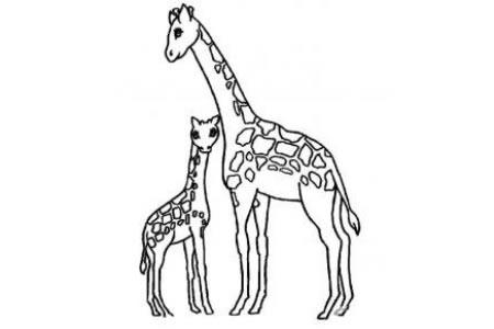 小长颈鹿和长颈鹿妈妈简笔画