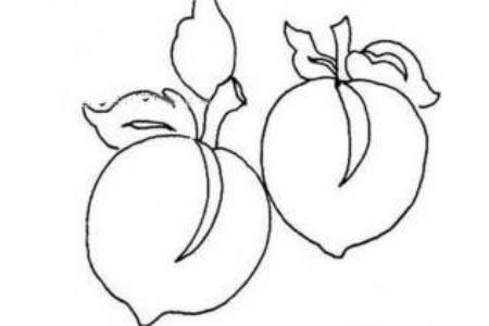新鲜的桃子