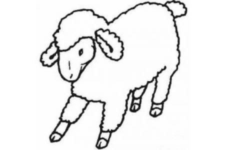 简笔画小绵羊