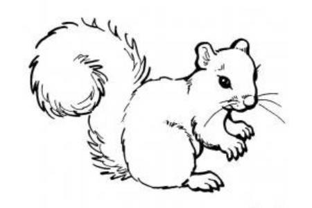 一只漂亮的松鼠