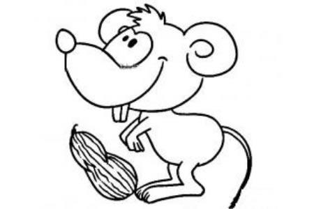 吃花生的小老鼠