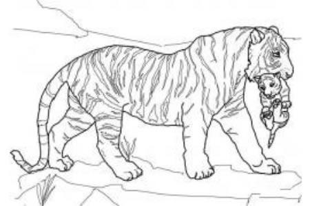 虎妈妈带着虎宝宝