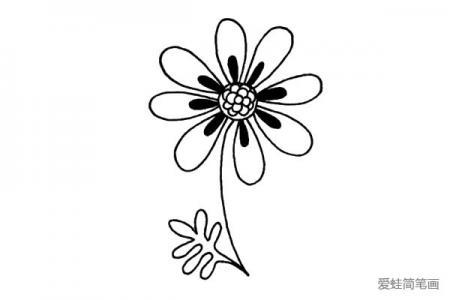适应力强的菊花