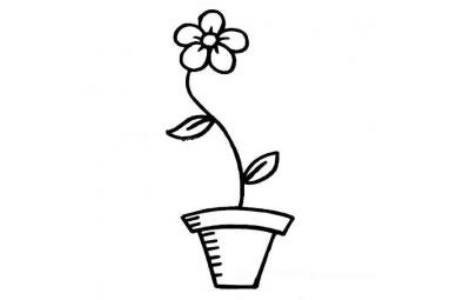 花盆里的一朵花简笔画