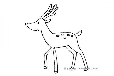 可爱的小动物 梅花鹿