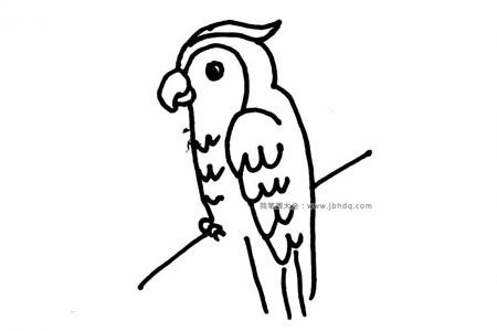 鹦鹉的简笔画