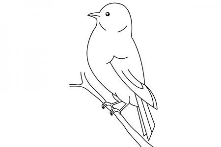 站在枝头的小鸟