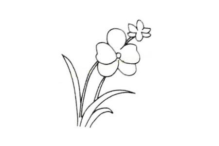 四步画出漂亮的兰花简笔画