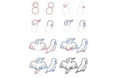 鹦鹉和鸽子简笔画步骤图