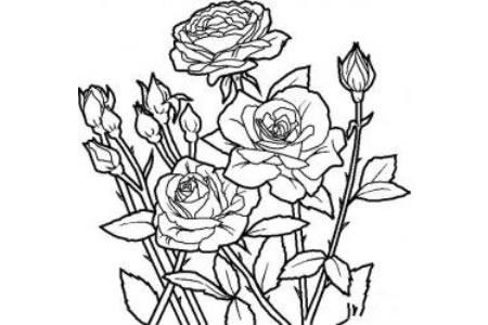 花朵的画法大全 带刺的玫瑰简笔画画法