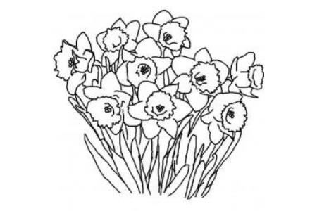 花朵简笔画大全 水仙花简笔画
