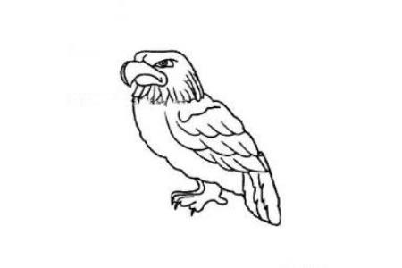 老鹰简笔画