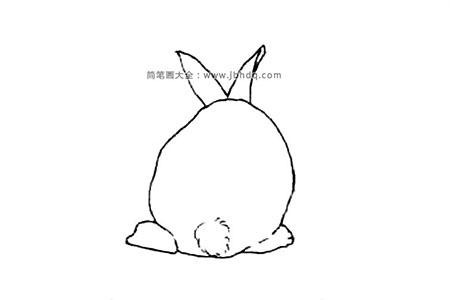兔子的背面