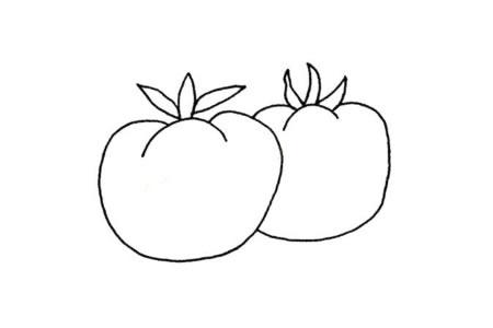 简单的植物简笔画 西红柿简笔画图片