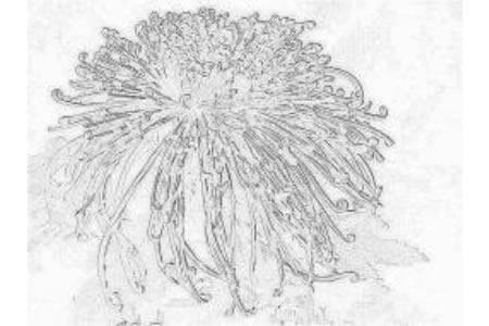 美丽的菊花儿童画画作品