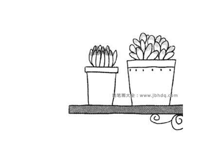 盆栽简笔画 多肉植物