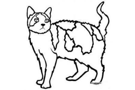 猫咪图片 美国刚毛猫简笔画
