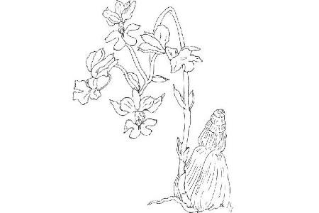 我国传统名花兰花