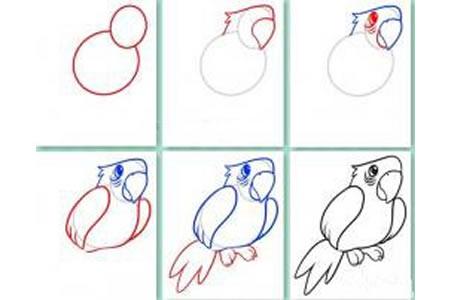 如何画鹦鹉