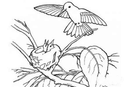 鸟妈妈喂食它的小鸟们简笔画