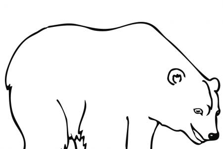 开心的北极熊