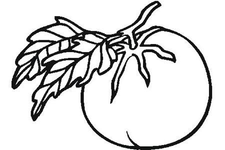 西红柿简笔画画法