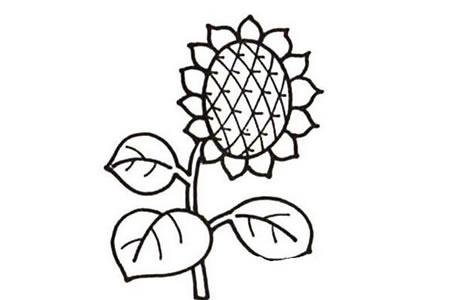 简单漂亮的向日葵简笔画