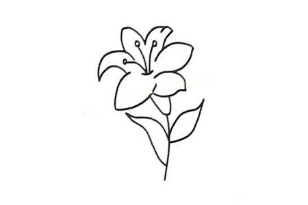 分步学画:漂亮的百合花