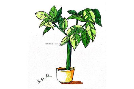 大型盆栽简笔画图片