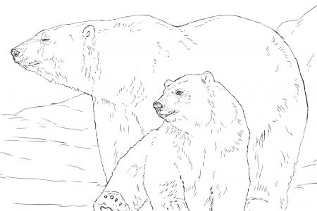 慵懒的北极熊