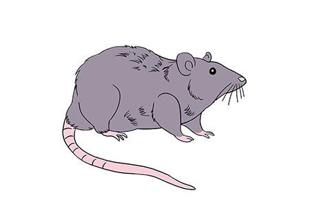 可恶的老鼠简笔画