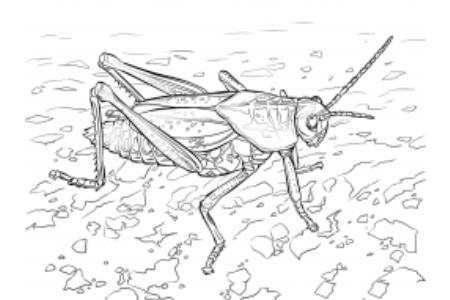 有趣的蚱蜢