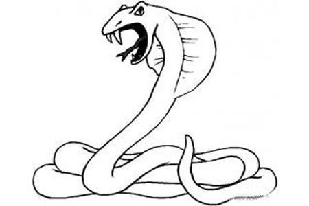 眼镜蛇简笔画图片