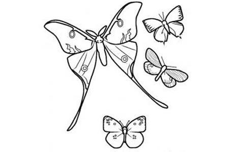 蝴蝶简笔画