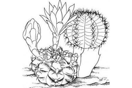 开花的仙人球简笔画