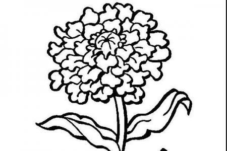 手绘漂亮的菊花简笔画图片