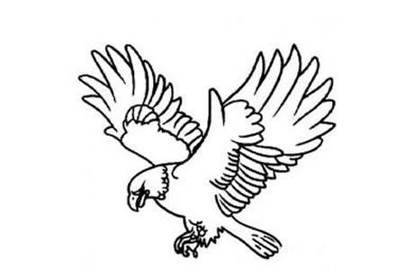 老鹰展翅简笔画