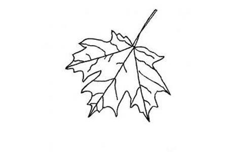 多种树叶简笔画画法