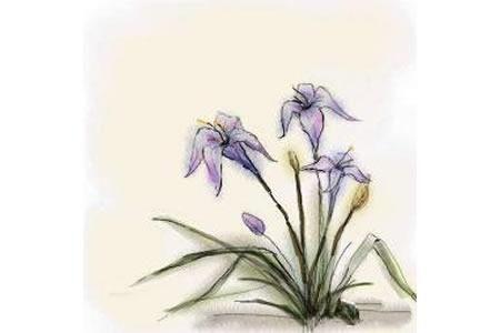 儿童画水仙花