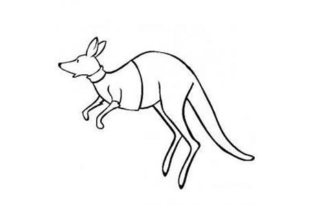 动物简笔画图片 袋鼠简笔画