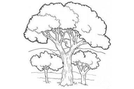 茂盛的大树简笔画