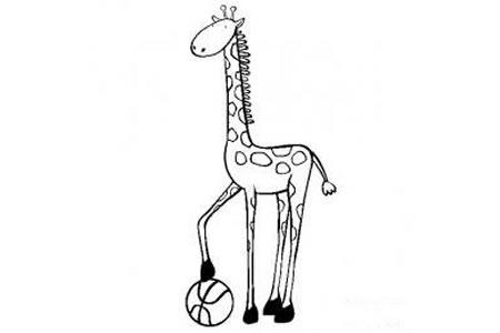 动物简笔画图片 长颈鹿简笔画